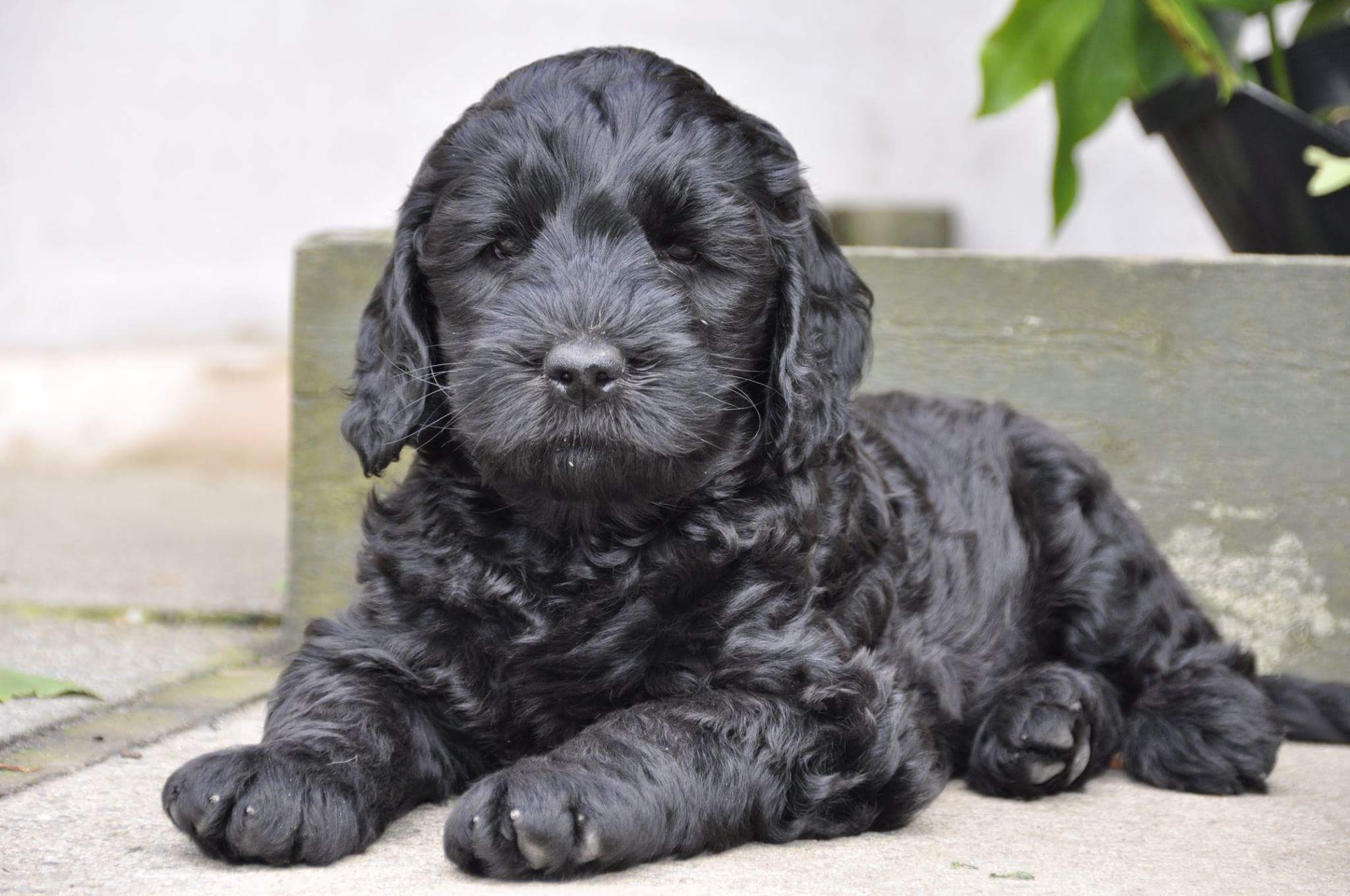 Beschikbare puppies - ...